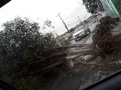 Vídeo: 73 árvores estão sendo monitoradas em João Pessoa