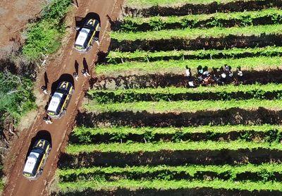 Ministério Público investiga intoxicação e trabalho infantil em fazenda na PB