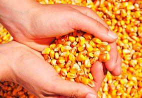 Acesso de criadores paraibanos aos estoques públicos de milho cresce mais de 340%