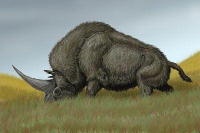 Rinoceronte da Era do Gelo é encontrado com órgãos intactos na Rússia