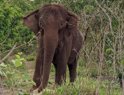 Há um ano Lady se despedia de João Pessoa; confira como está a elefanta